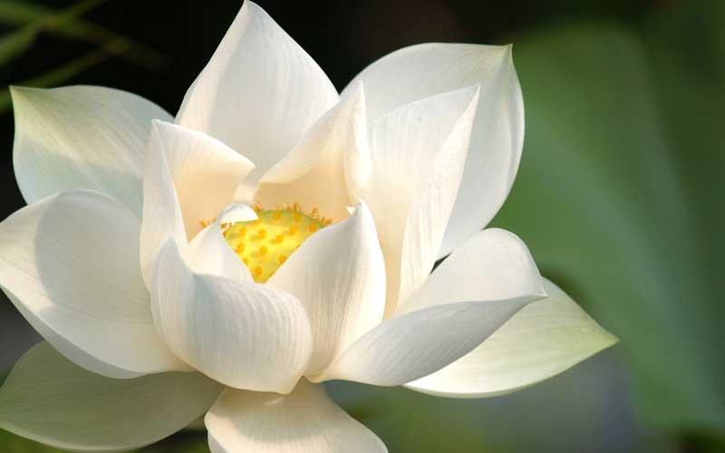 Meditar en bodichita y vacuidad